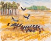 Vultures-on-Deer